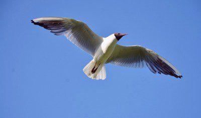 seagull-342718_640